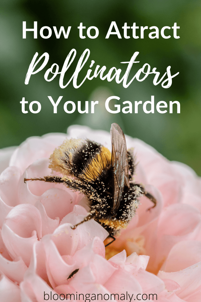 how to attract pollinators to your garden