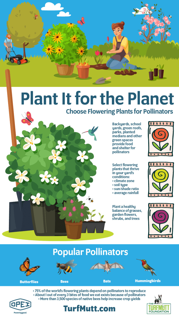attracting pollinators infographic