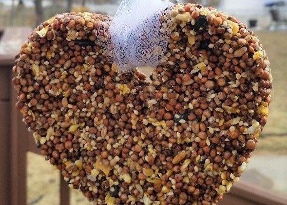 wild bird feeder cake heart shape
