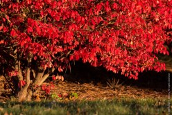 Red Fall Leaves