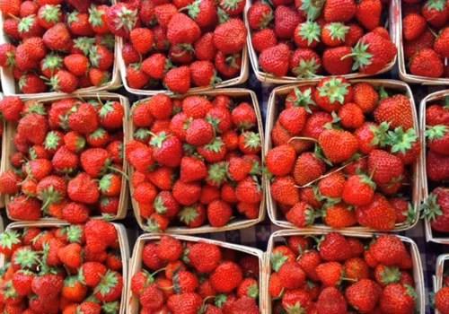 PickYourOwnStrawberries