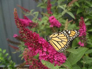 Mothers Day Gift Ideas: Butterfly