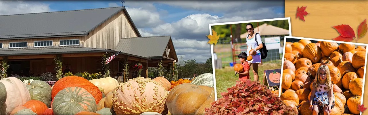 Lots of mums, pumpkins, and fun fall family friendly activities!