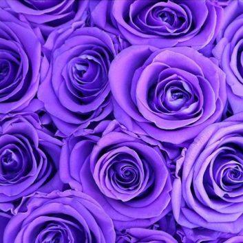 order-flowers-online-melbourne-bloomsbox.com.au