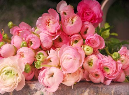 How to care for ranunculus  The only problem is that they are more delicate than most flowers and need  special care  hence they have become the redonkulous ranunculus