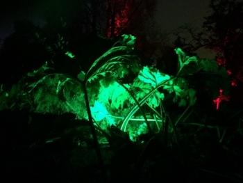 Garden lighting ideas for the winter garden