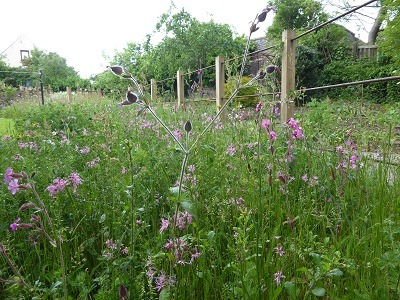 wildflower_meadow_Scottish_Borders_garden