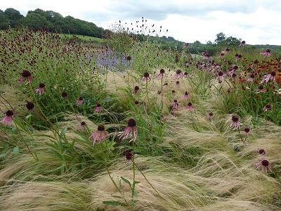 Ornamental grasses create movement in the garden