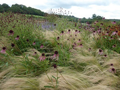 Ornamental grasses create movement in the garden