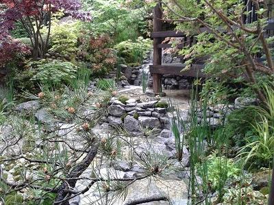 Japanese garden Chelsea