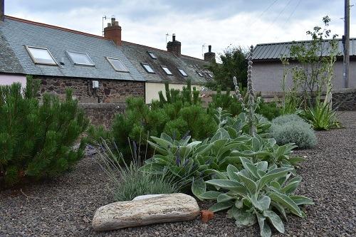 Mediterranean_gravel_garden_Berwickshire