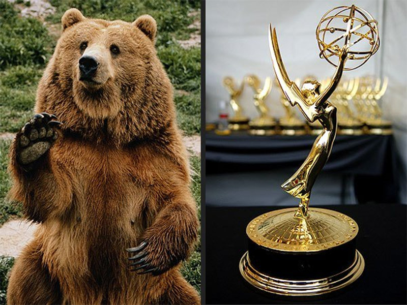Beats Bears And The Battle For Emmy