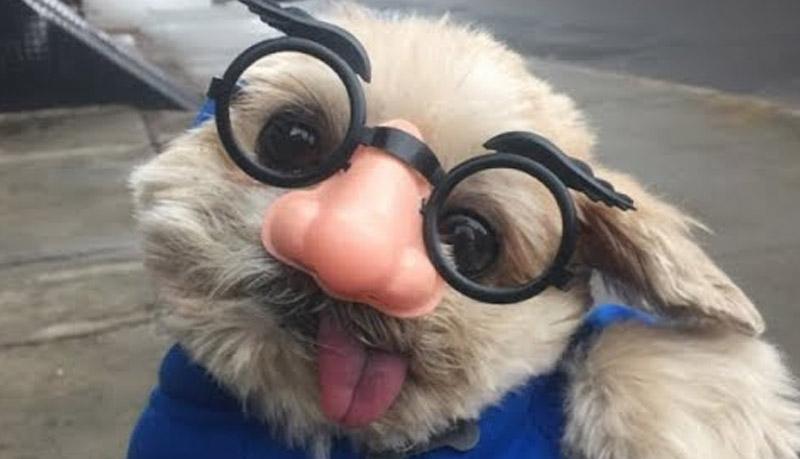 Doggo Images