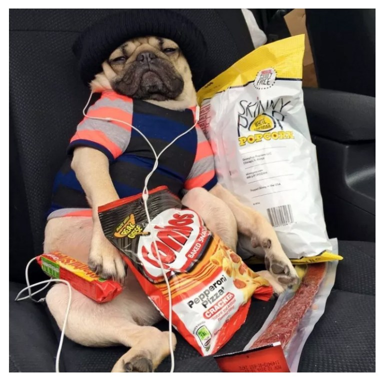 Doug the Pug Surrounded by a Bunch of Tasty Snacks