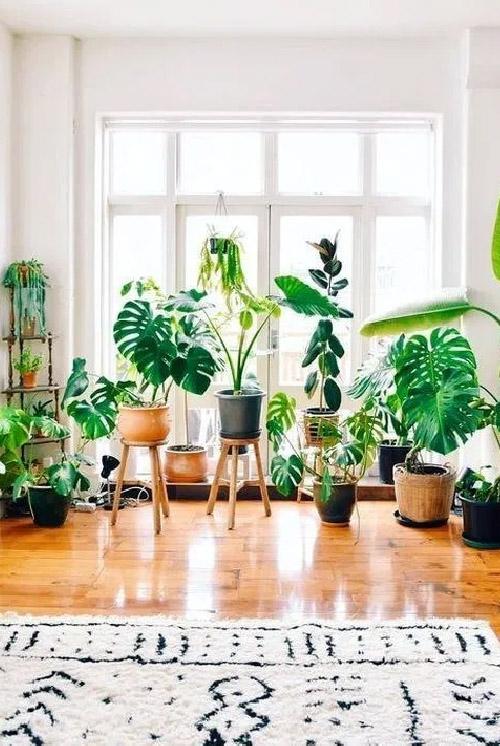Cozy Indoor Plants