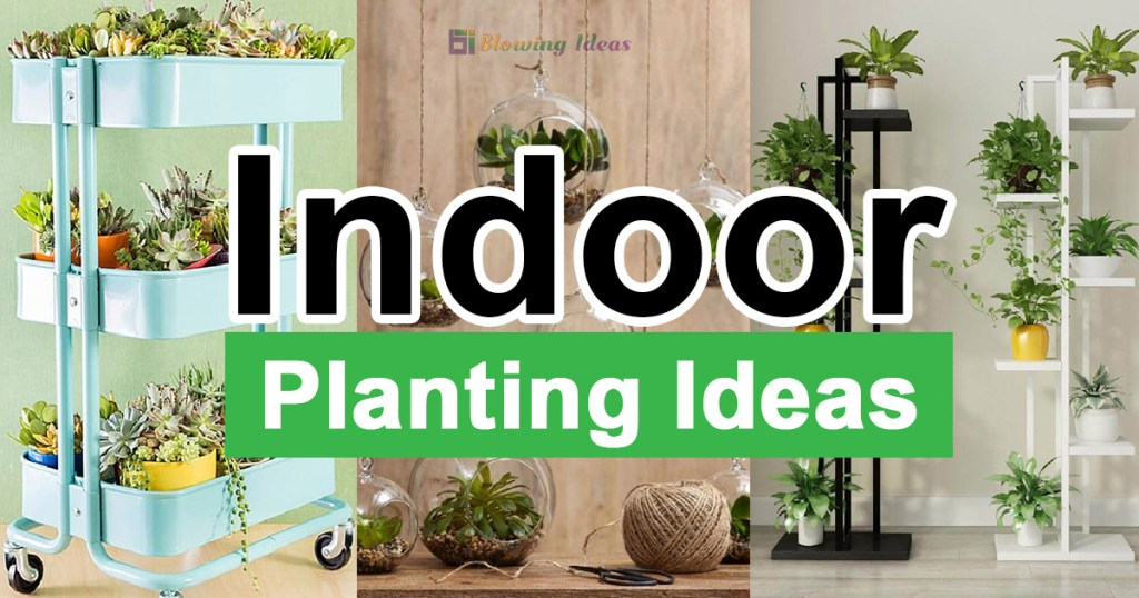 Indoor Planting Ideas For Your Home