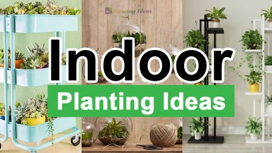 Photo of Indoor Planting Ideas for your Home