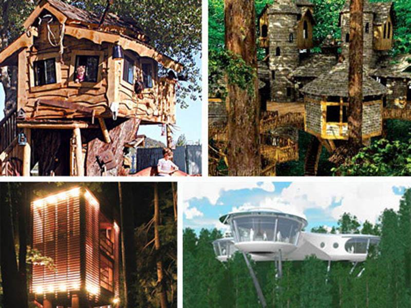 Amazing Creative Unique Tree House