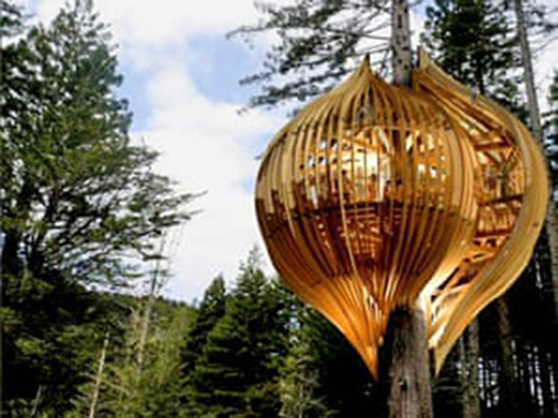 The Best Tree House