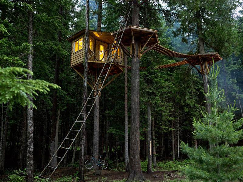 Unbelievable Tree House