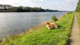 Erstaunlich grün der Kanal mit zahlreichen Wasservögeln.
