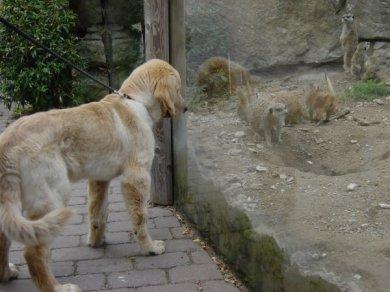 Frodo im Zoo