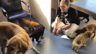 Tag 53: Sechs Mini-Hovis beim Tierarzt