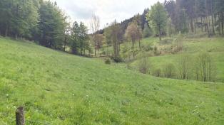Blick aufwärts vom Klucksbachtal