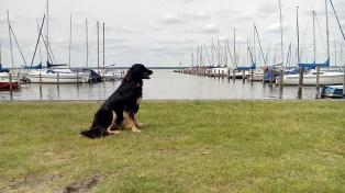 Rund 5000 Sport- und Segelboote gibt es am See