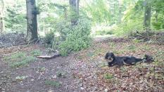 Nach dem Sturm: Viele abgebrochene Äste im Wald
