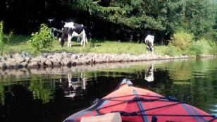 Weideflächen direkt am Wasser