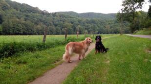 In der Eifel bei Nideggen