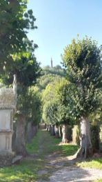 Bick vom Kreuzweg neben dem Westfriedhof hinauf zur Mariensäule