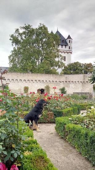 Rosengarten neben der Burg