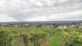 Weinberge auf dem Weg von Erbach nach Kiedrich