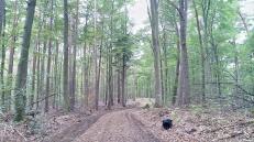 Wald, Wald, Wald