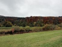 Wiesen und Wald auf dem Rückweg nach Lauchringen