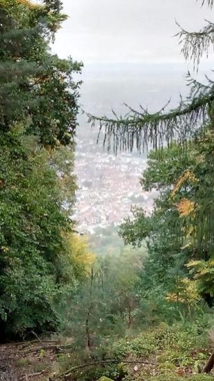 Blick vom Nollenkopf hinunter in die Altstadt von Neustadt an der Weinstraße