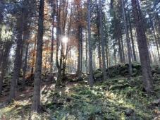 Die Sonne strahlt zwischen den Bäumen hindurch