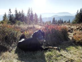 Auf den Höhenlagen des Schwarzwaldes