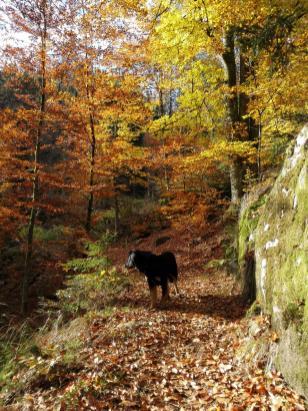 Aufstieg durch den bunten Herbstwald zum Lehenkopf