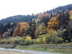 Bunter Herbstwald an der B31 von Freiburg nach Titisee