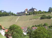 Weinhänge unterhalb von Schloss Eberstein
