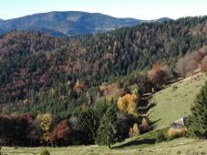 Herbstwald an der Westflanke des Belchens