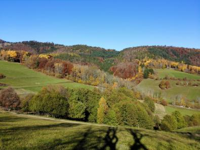 Herbstwald bei Schönau