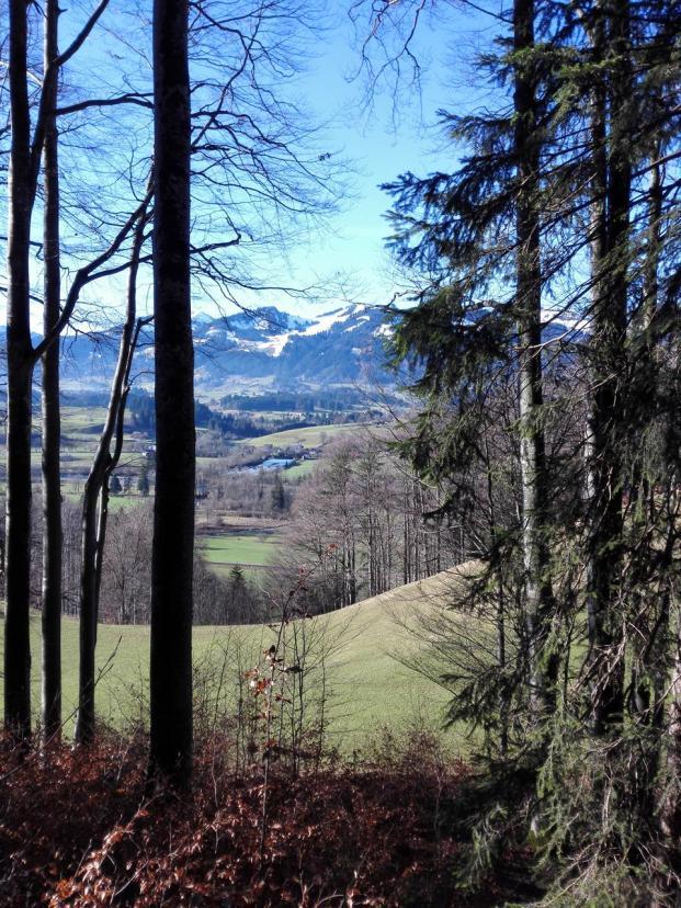 Blick aus dem Wald auf die Allgäuer Alpen