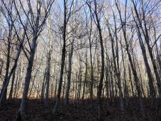 Nichts los im Winterwald