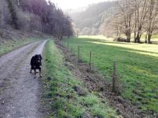Im Tal des Richelsbachs