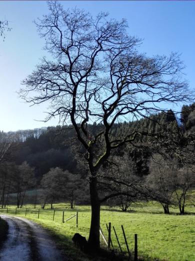 Im Tal des Tiefenbachs