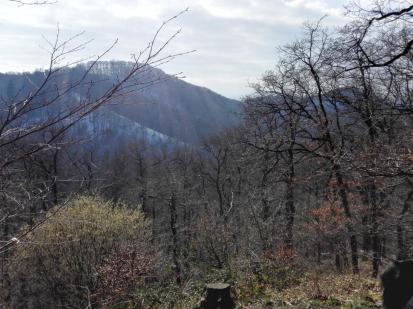 Aussichtspunkt Löwenburgblick